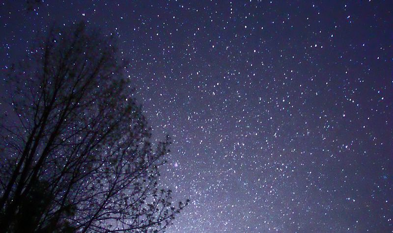 800px-night_sky_stars_trees_02